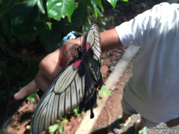 62-butterfly-garden-dubai-pictures-2015-emiratesdiary-062