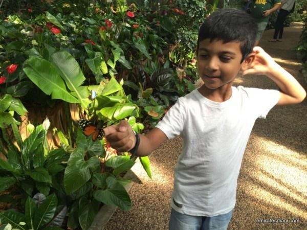79-butterfly-garden-dubai-pictures-2015-emiratesdiary-079