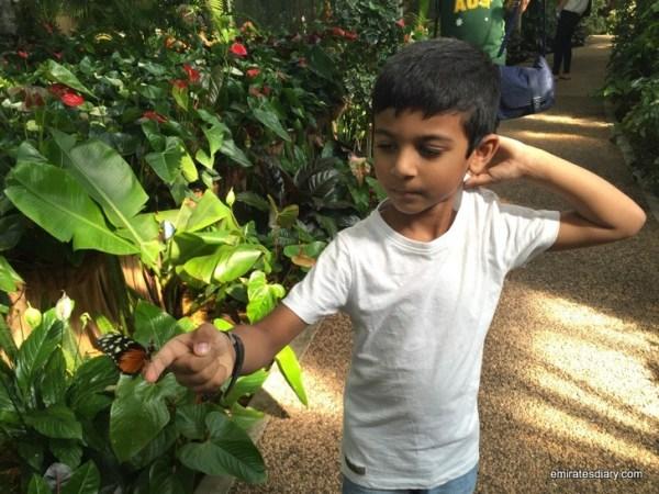 81-butterfly-garden-dubai-pictures-2015-emiratesdiary-081