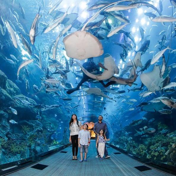 Aquatic Aquarium