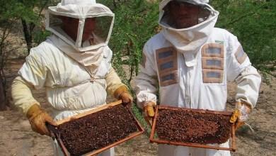 Photo of 330 productores apícolas serán ayudados con proyecto por más de 3,5 millones de pesos