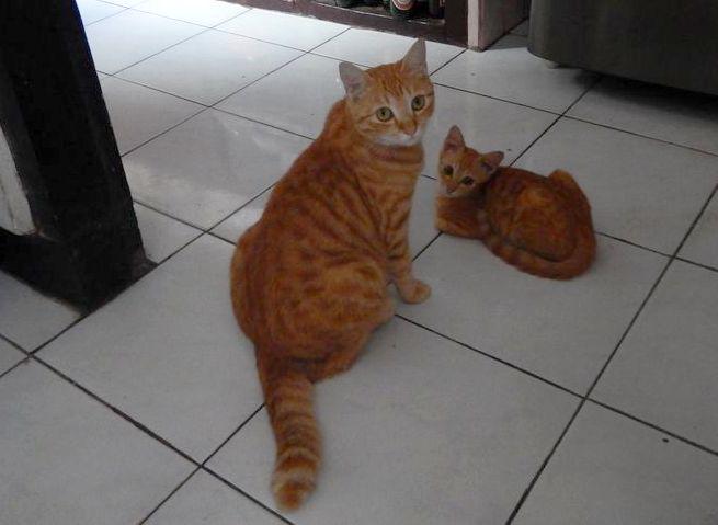 rude_koty