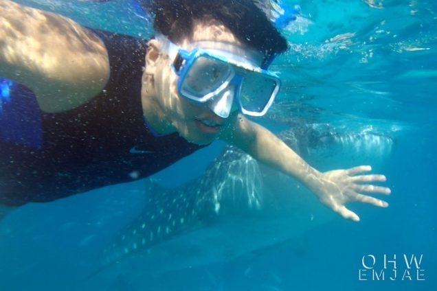 whale sharks watching oslob cebu