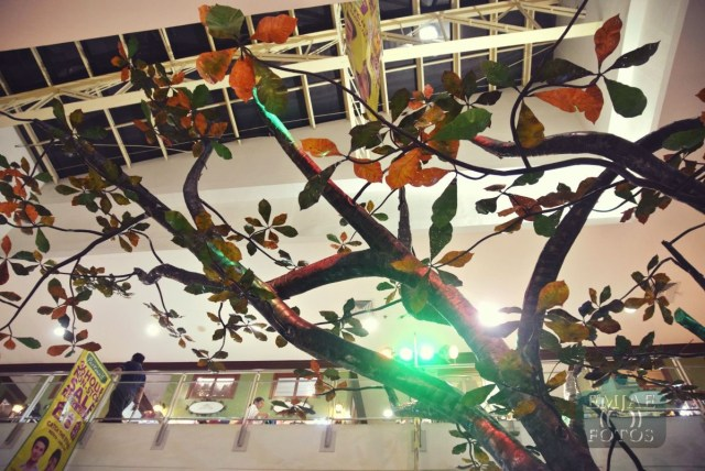 Talisay Tree Rediscover Life Indoor Park Parkmall