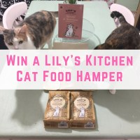 Win a Lily's Kitchen Cat Food Hamper