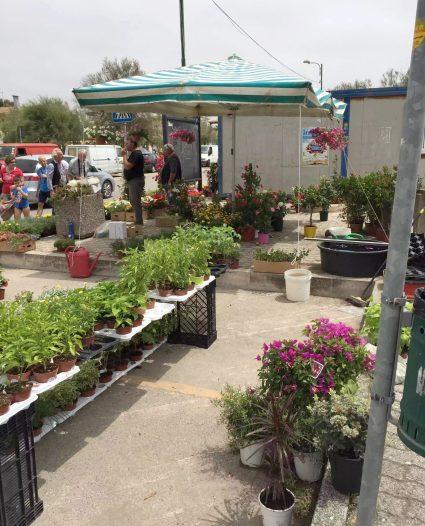 San Pietro in Bevagna Flower Market Puglia Italy