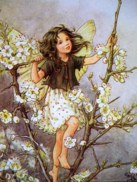 182a192dd3120b8aac5b83c41d879cf3--cicely-mary-barker-flower-fairies