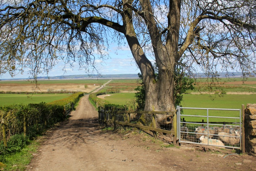 Marsh Road by Weobly Castle, North Gower