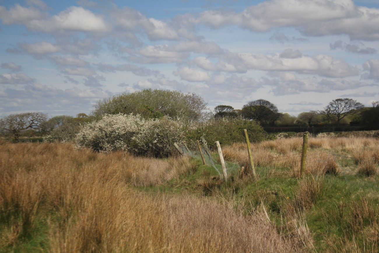 North, Gower, Llanridian Marsh