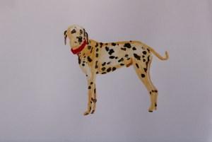 Painting of Dalamtian Dog for sale