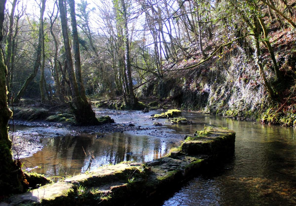 Photo of woodland near Gower Inn