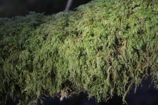 Gower Moss