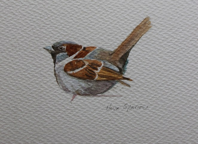House sparrow painting