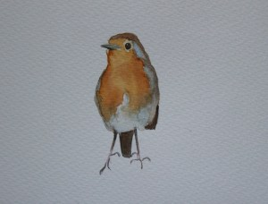 watercolour painting of robin
