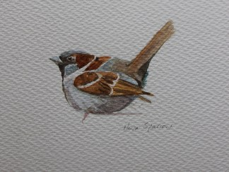 House Sparrow watercolour by Emma Cownie
