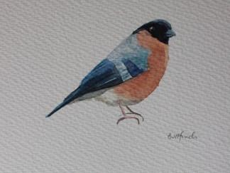 Watercolour of a bullfinch