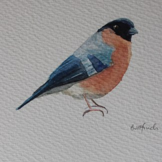 Watercolour of a bullfinch