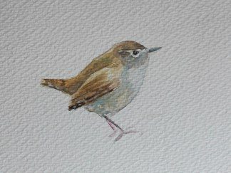 Wren Watercolour