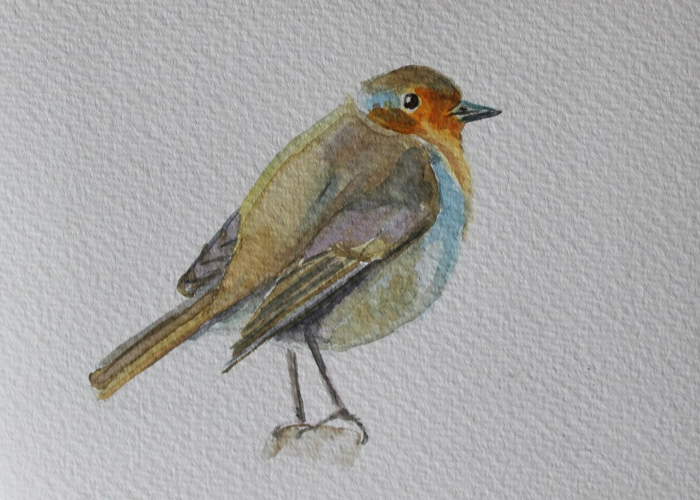 Robin Watercolour