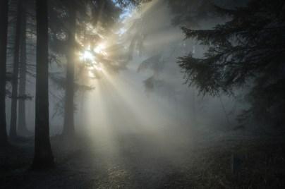 forest, Grunwald, author, novel, Emma Fox, Beast of Weissburg