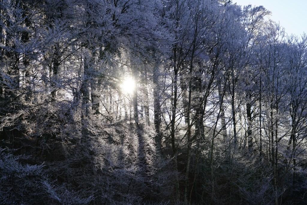fairytales, folktales, forest, frost