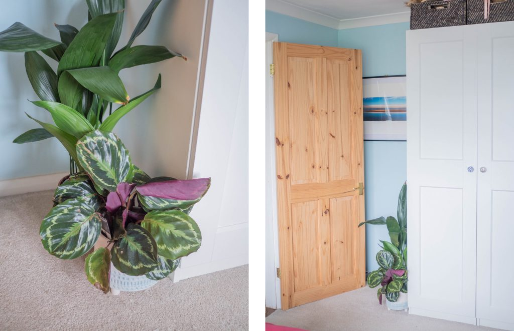 blue bedroom with plants