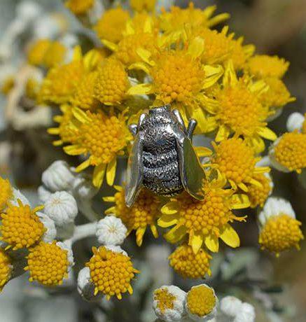 Bees-2---Emma-Keating-Jewellery