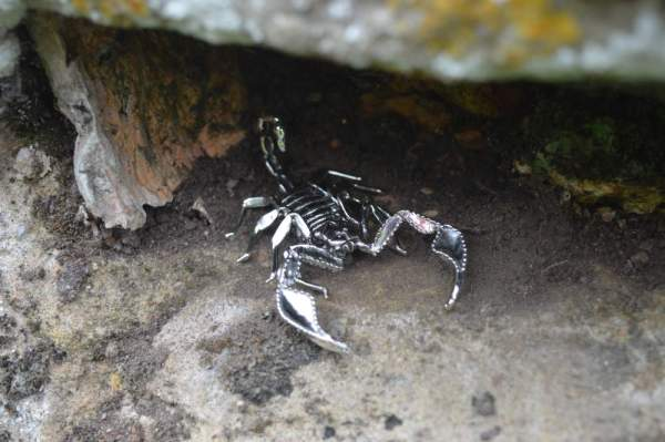 Sheerness Scorpion Orn7 - Emma Keating Jewellery__sm