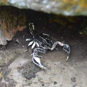 Sheerness Scorpion Orn7 - Emma Keating Jewellery__sm