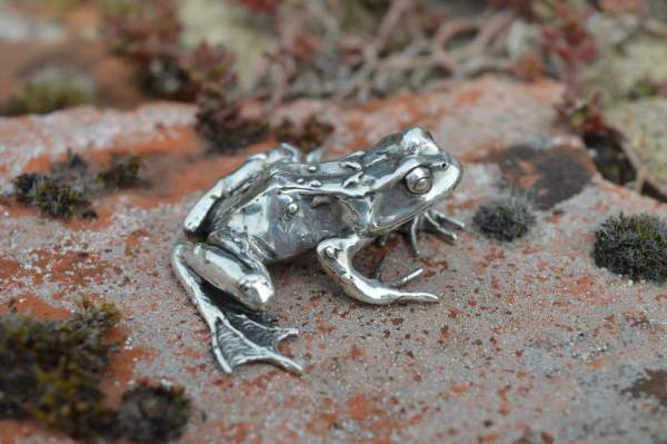 Common Frog L2s - Emma Keating Jewellery