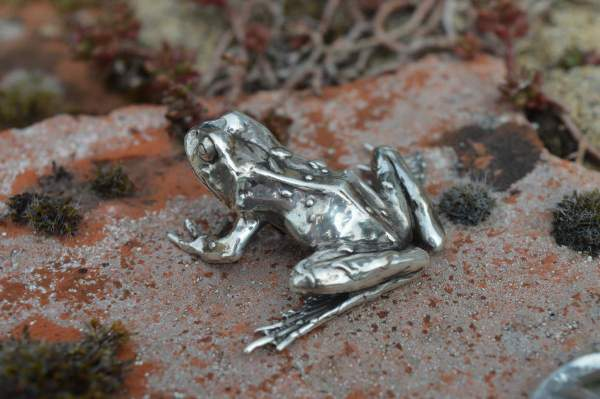 Common Frog L5s - Emma Keating Jewellery