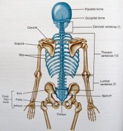 axial skeleton diagram [ 2699 x 2947 Pixel ]