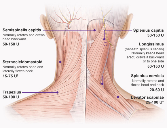 diagram lymph nodes on back of head split charge wiring muscles-of-the-neck-and-head | dramatic context