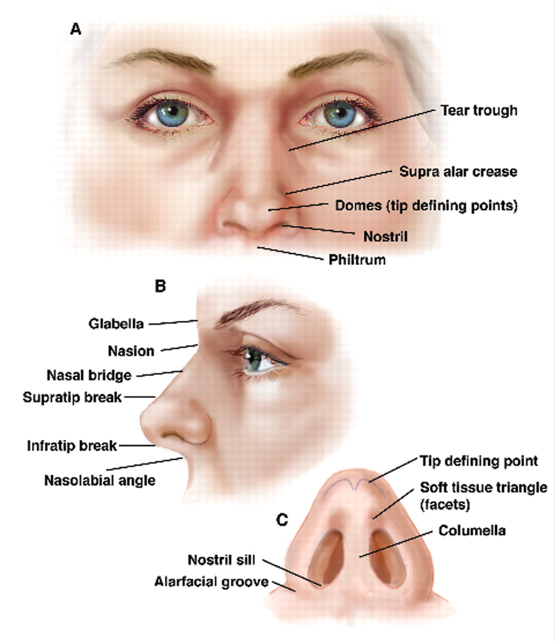hight resolution of nose anatomy dramatic context