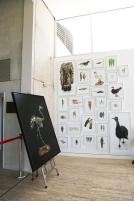 E Lindsay 2016 Extinction project (installation view). Collection of the Artist.