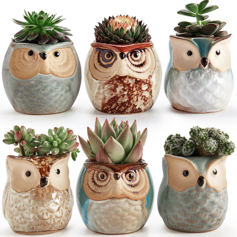 succulents on sale in owl planters