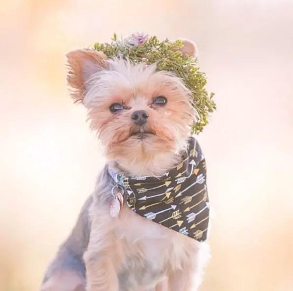 dog wedding ideas
