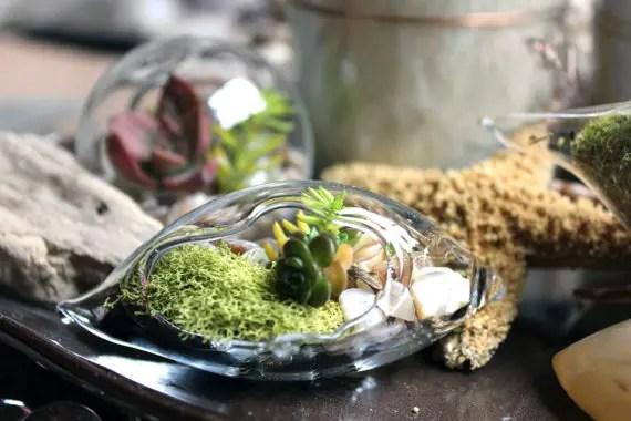 succulent wedding terrarium favors (by uniquely wed)