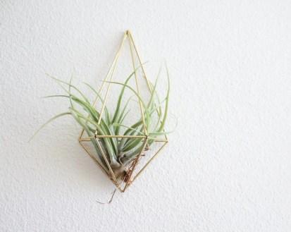 wall sconce air plant modern geometric