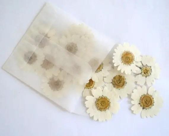 white dried daisies by flowerfetti | daisy ideas theme weddings