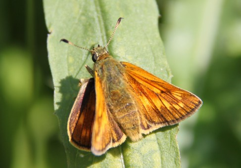 Moth at ZSL Whipsnade Zoo