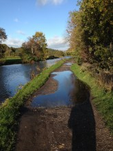 Puddles on towpath on Rodley Canal