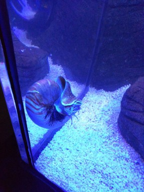 Sea Snail at the Sea Life Centre in Scarborough
