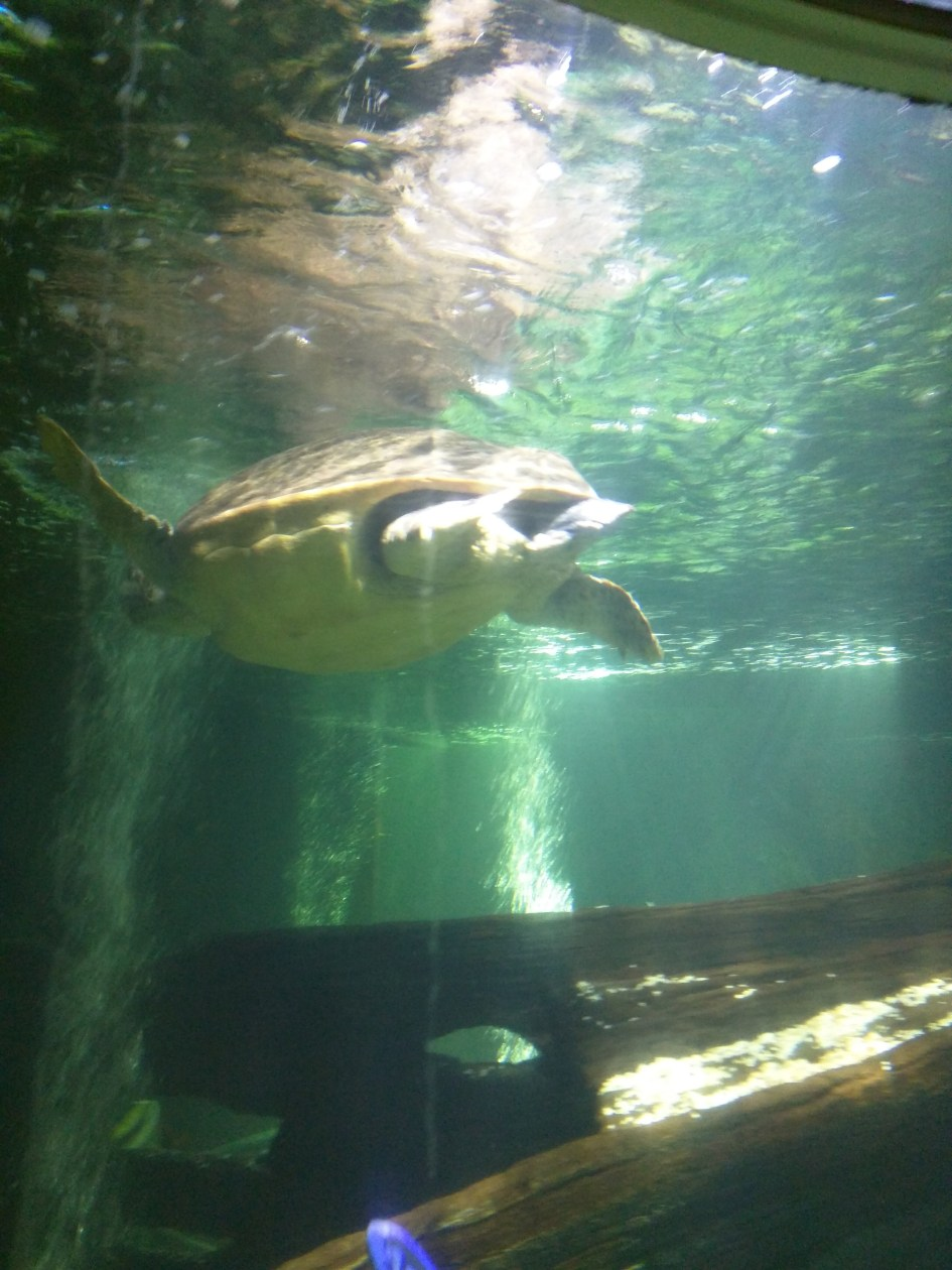 Turtle at the Sea Life Centre in Scarborough