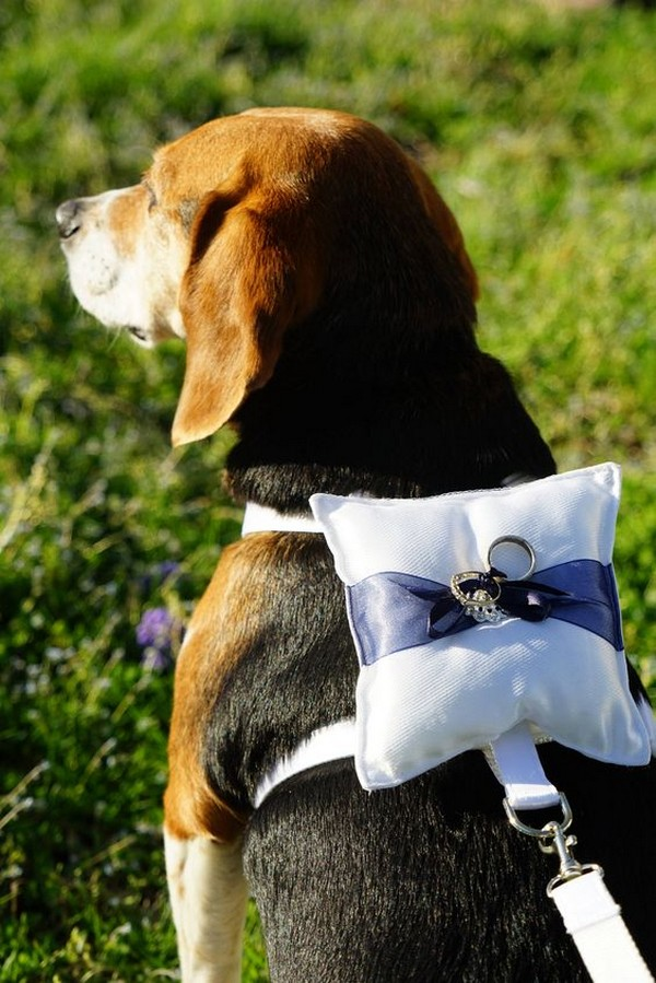 18 Precious Wedding Photo Ideas with Your Dogs  EmmaLovesWeddings