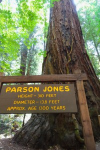 Parson Jones tree Northern California