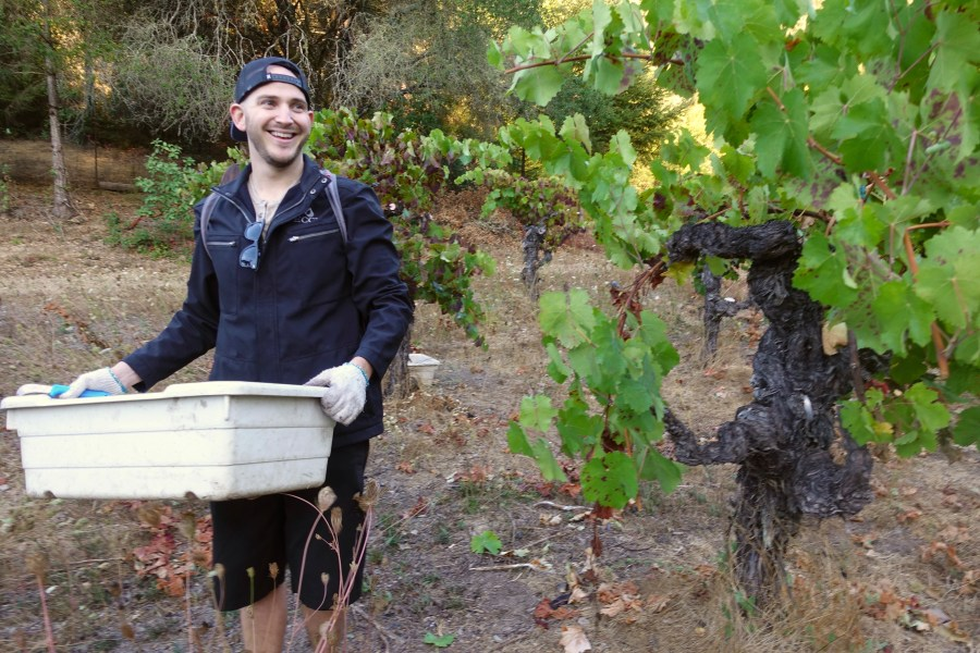 Experience Wineries Sonoma County