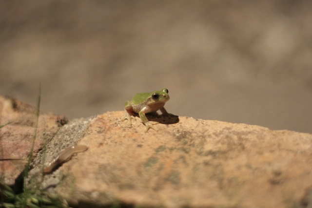nature-night-frog