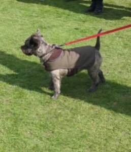 Chiswick House Dog Show 2015