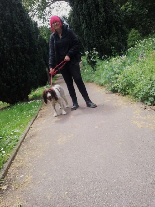 FREDDIE OUR ENGLISH SPRINGER SPANIEL DURING HIS DOG WALKING IN LONDON!